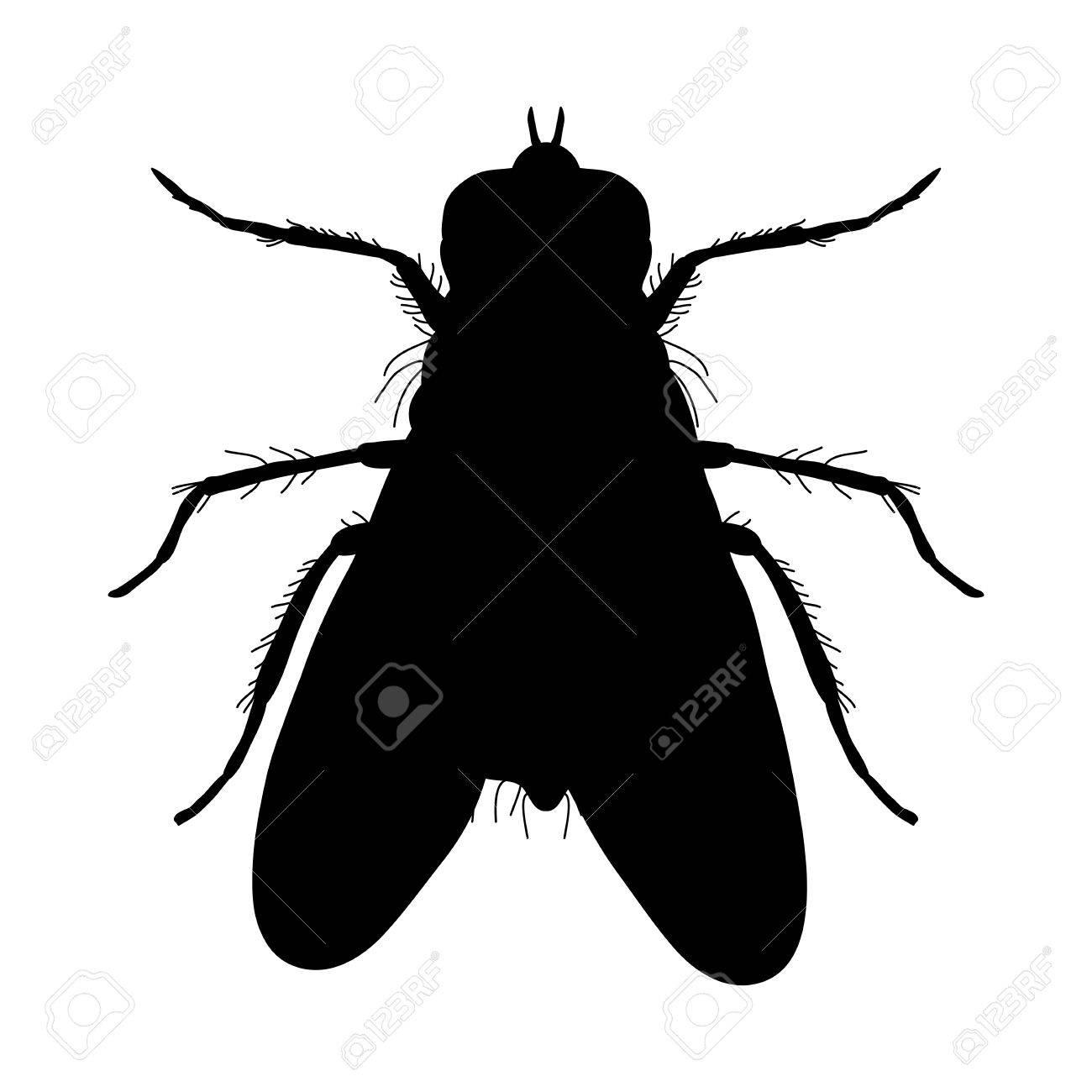 Silueta De Insectos. Pegatina Insecto Escarabajo De Tierra ...