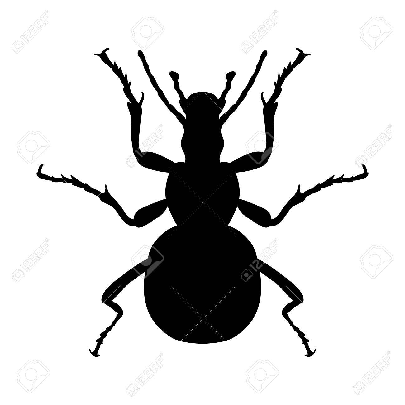 Tolle Insekt Anatomie Diagramm Zeitgenössisch - Anatomie Ideen ...