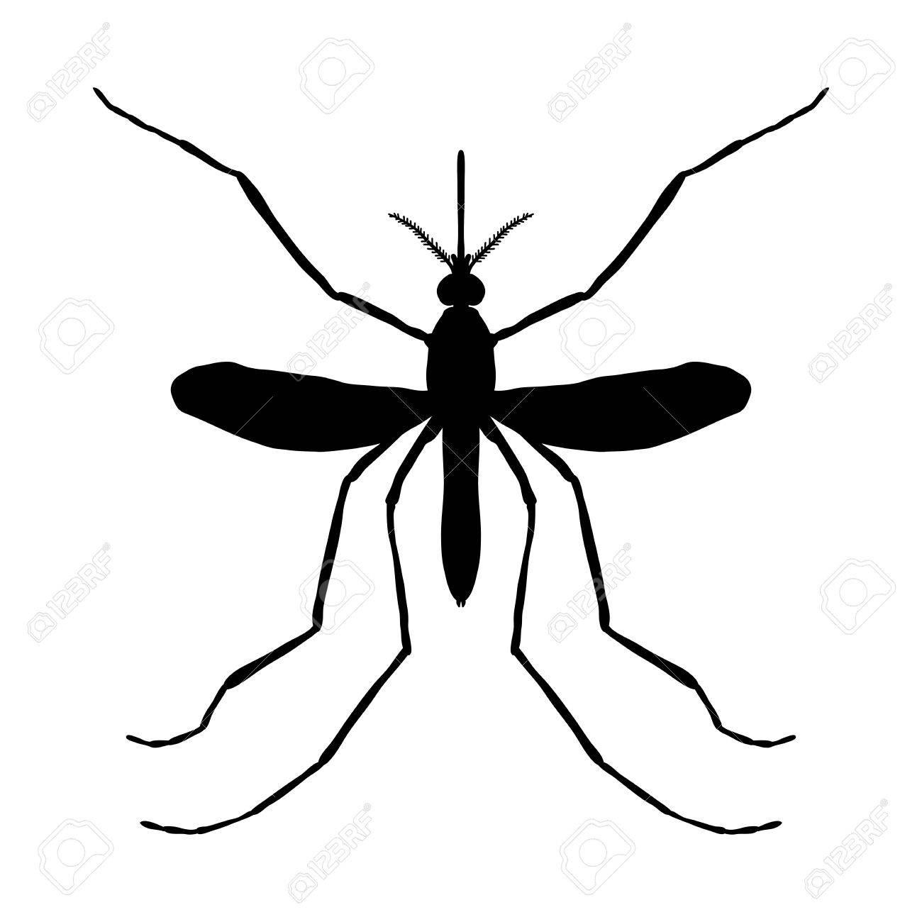 Insekt Silhouette. Insekt. Eine Realistische Mücke. Culex Pipiens ...