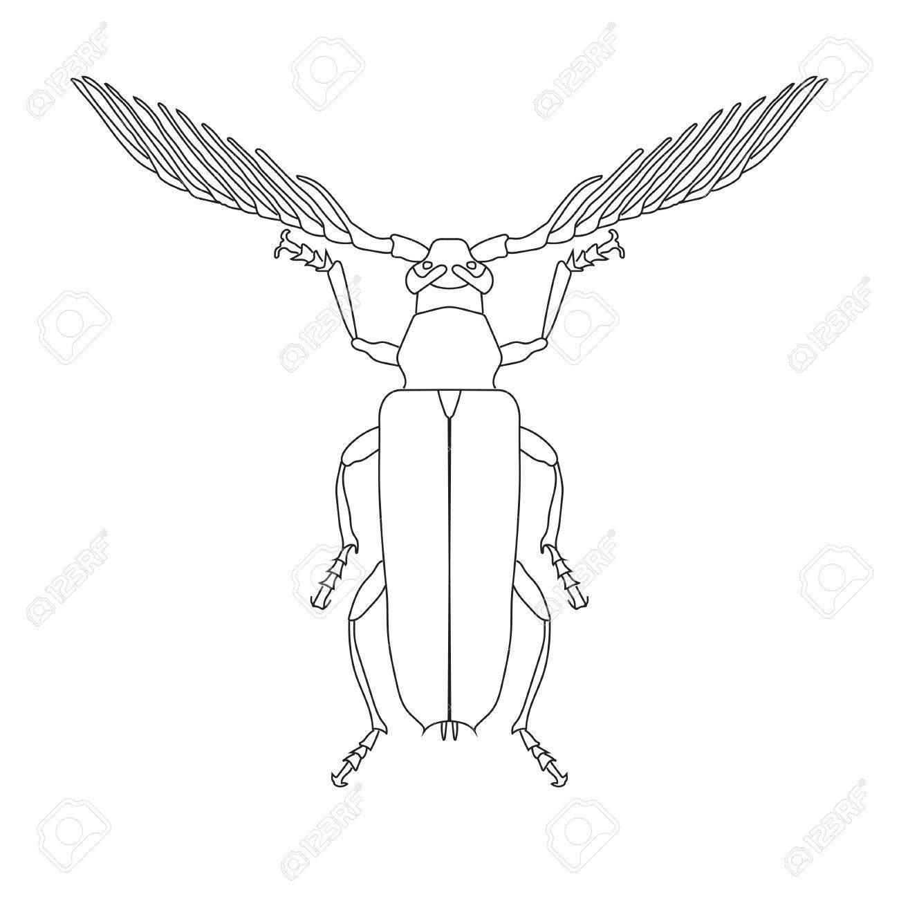 Skizze Des Skalbaggar Käfer. Skalbaggar Käfer Auf Weißem Hintergrund ...