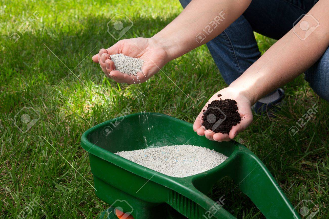 Preparing to fertilize lawn in back yard in spring time - 18236256
