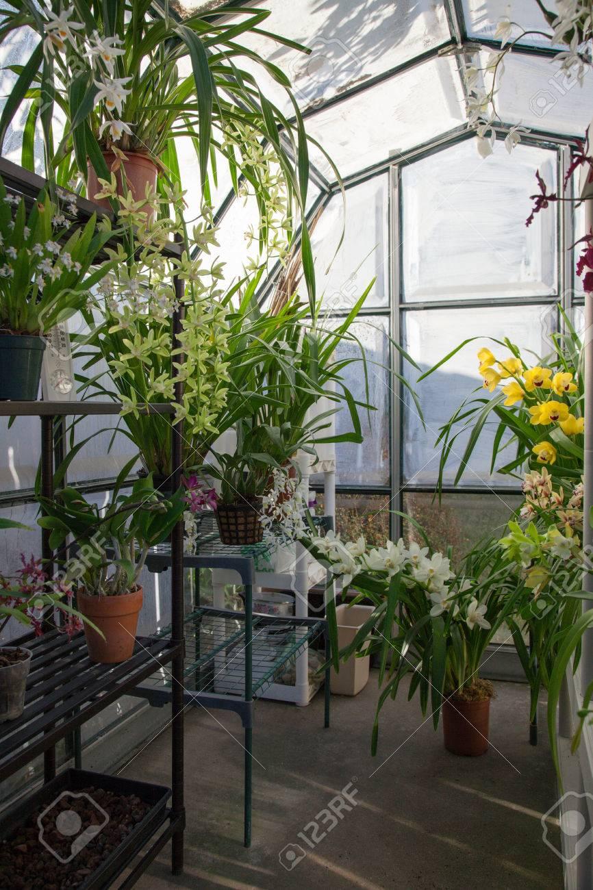 Hobbist appartenant à effet de serre de jardin à l\'arrière avec des  orchidées plantes fleuries