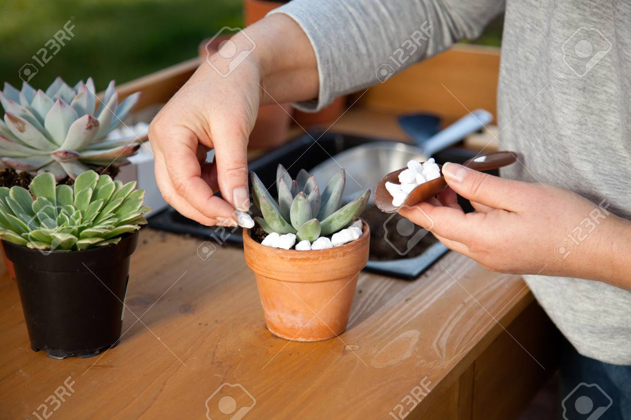 Decorating clay pots with succulent plants with marble gravel..