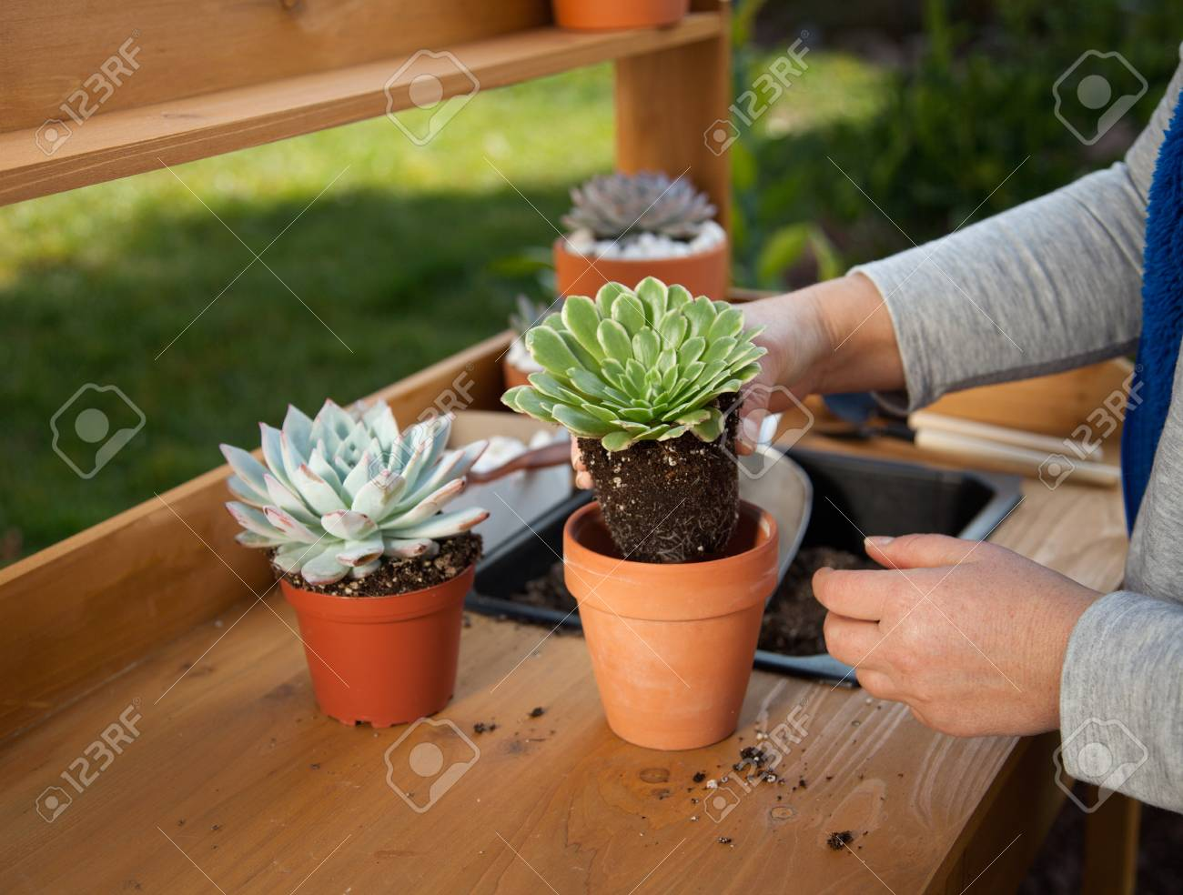 Groovy Planting Succulent Plant Into A Clay Pot At Garden Bench In A Caraccident5 Cool Chair Designs And Ideas Caraccident5Info