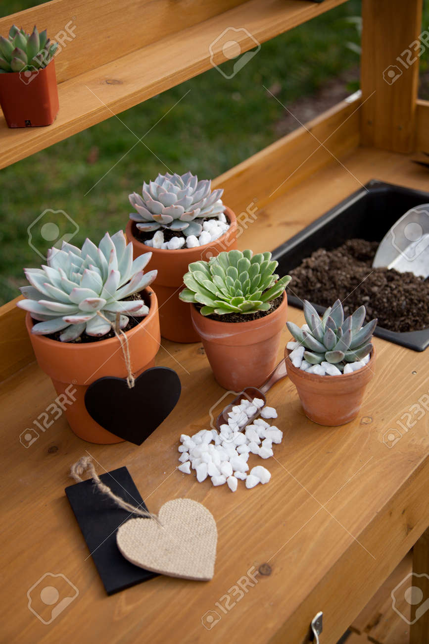Closeup of assorted succulent plants and clay pots on garden bench ready for planting season. - 162557492