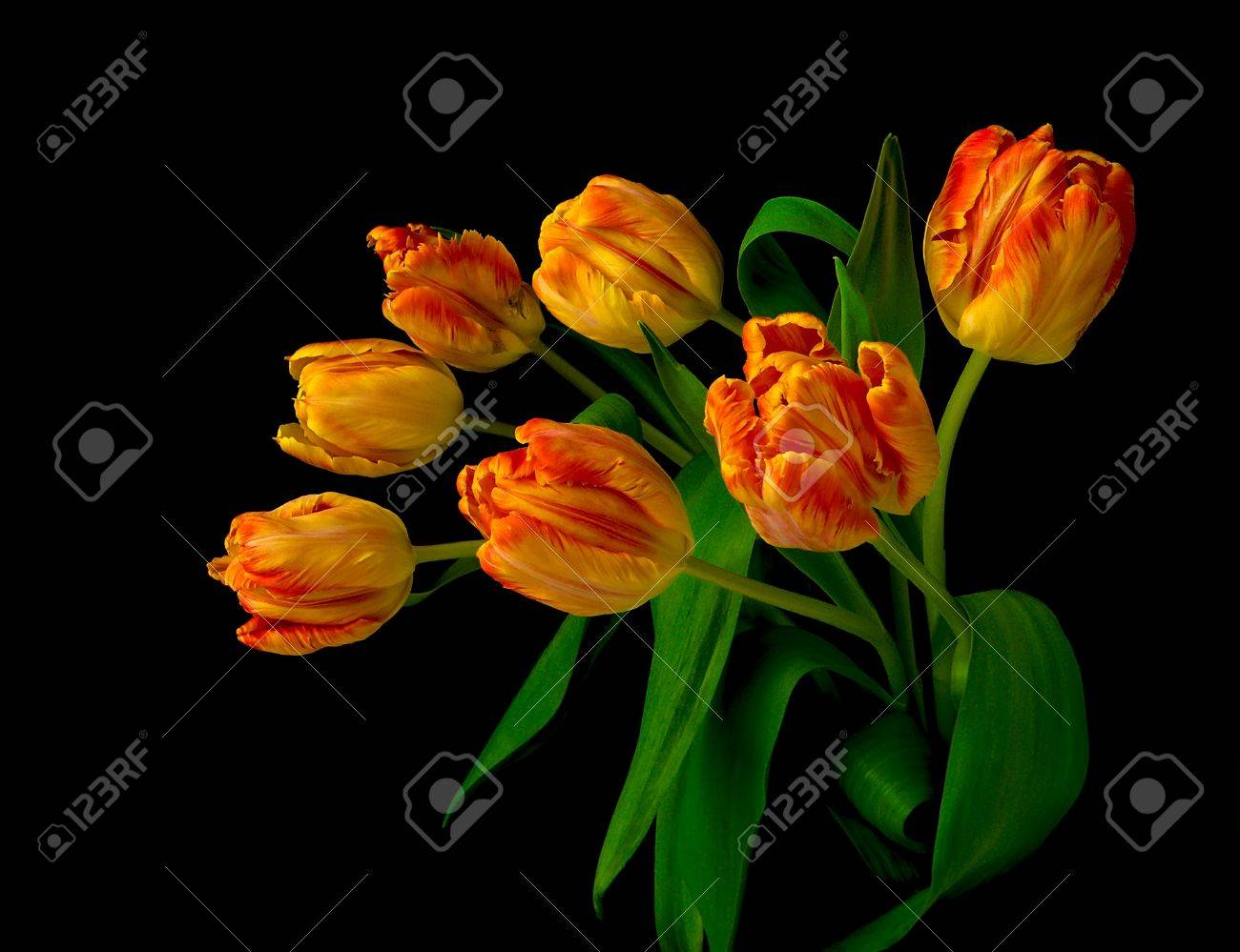beautiful bouquet of seven tulips on black background close up Stock Photo - 12181454