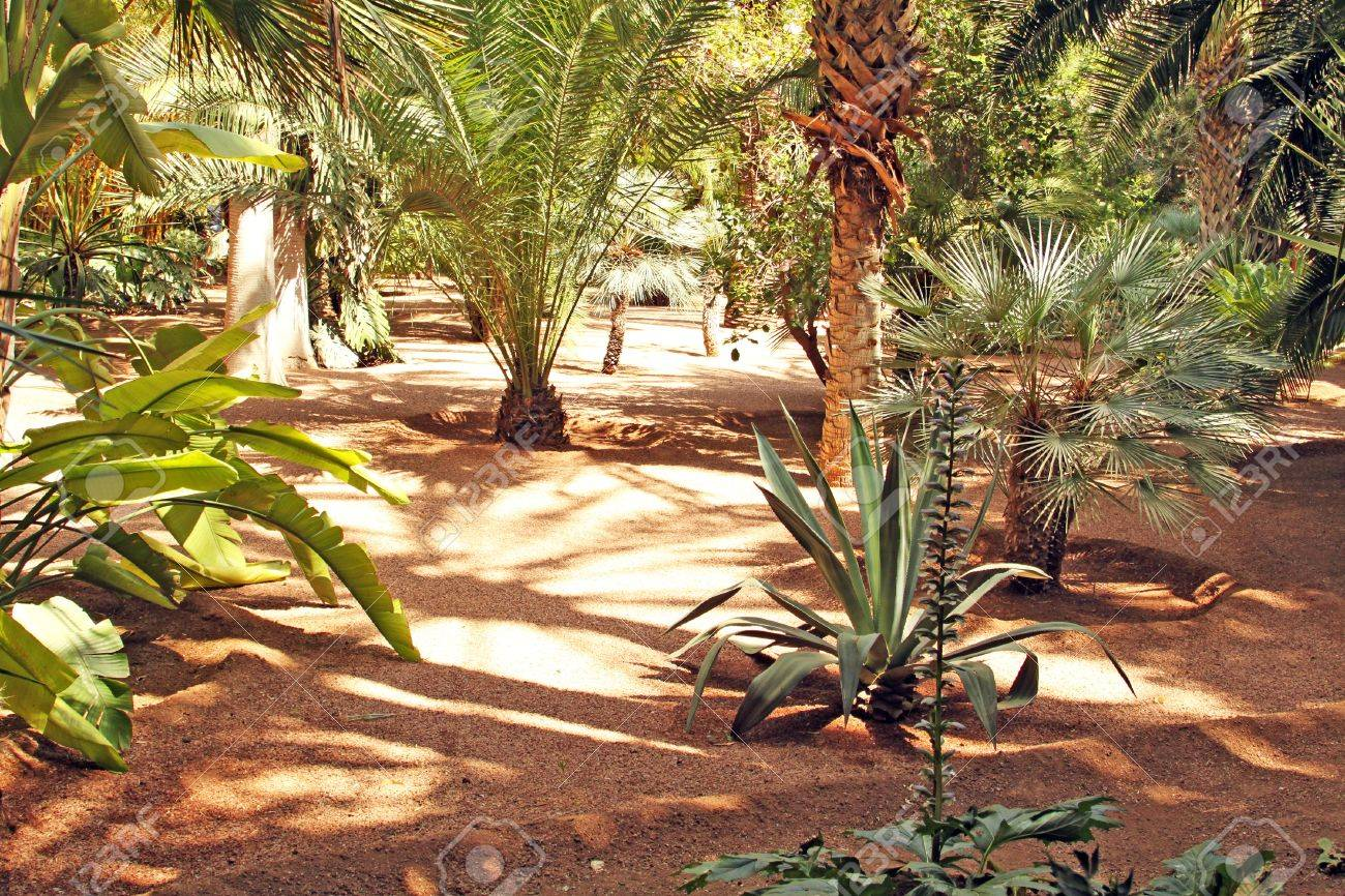 The Tropical Garden Trees, Palms, Cactuses, Yuccas, Etc Stock Photo ...