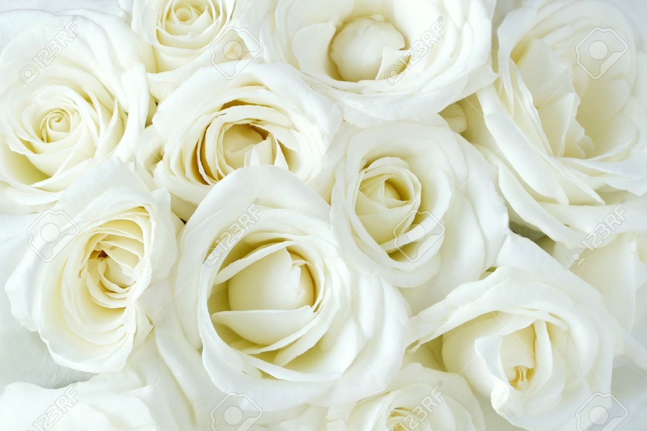 Soft full blown white roses as a background Stock Photo - 12604015