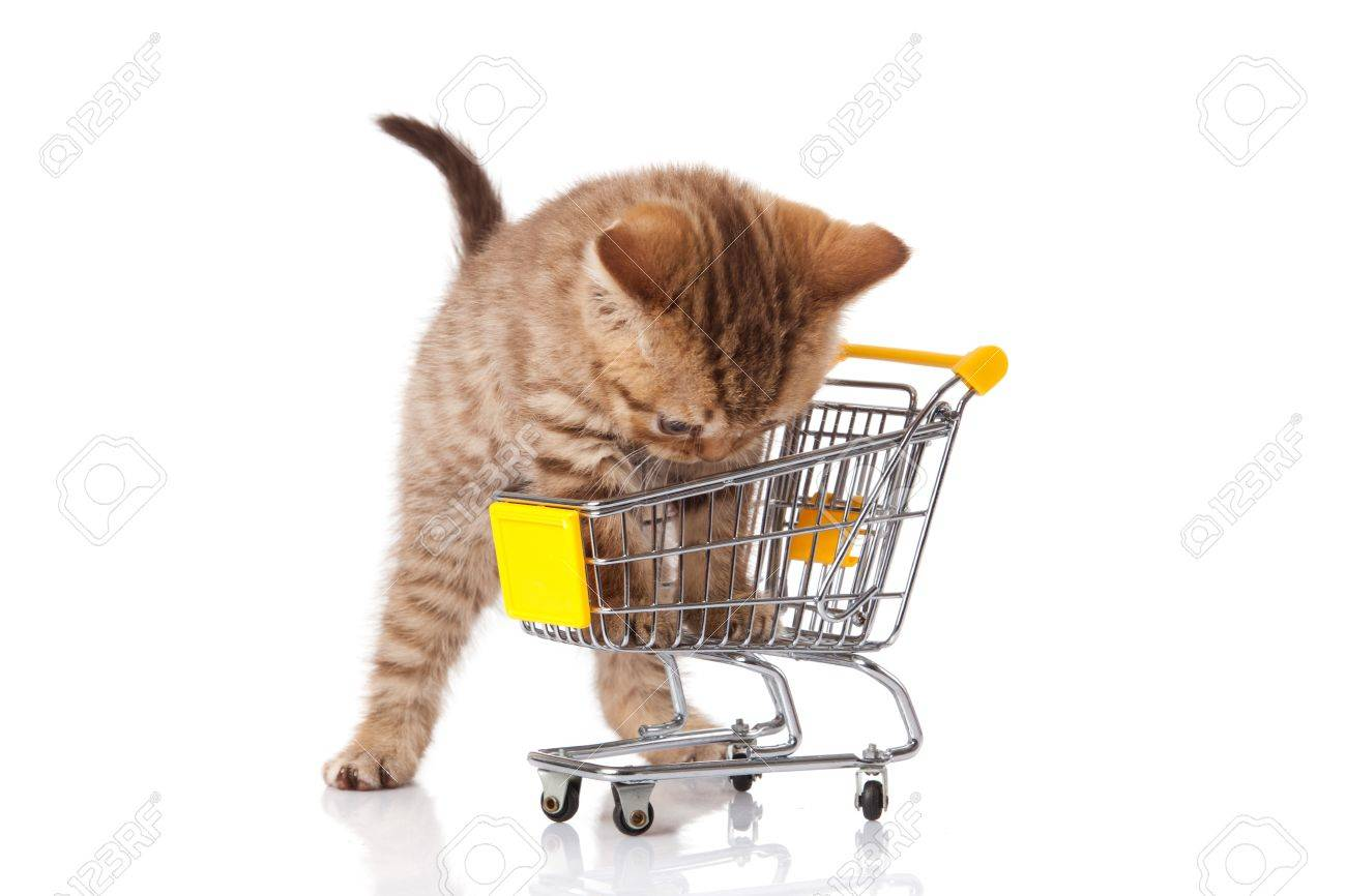 british cat with shopping cart isolated on white  kitten osolated Stock Photo - 15189361
