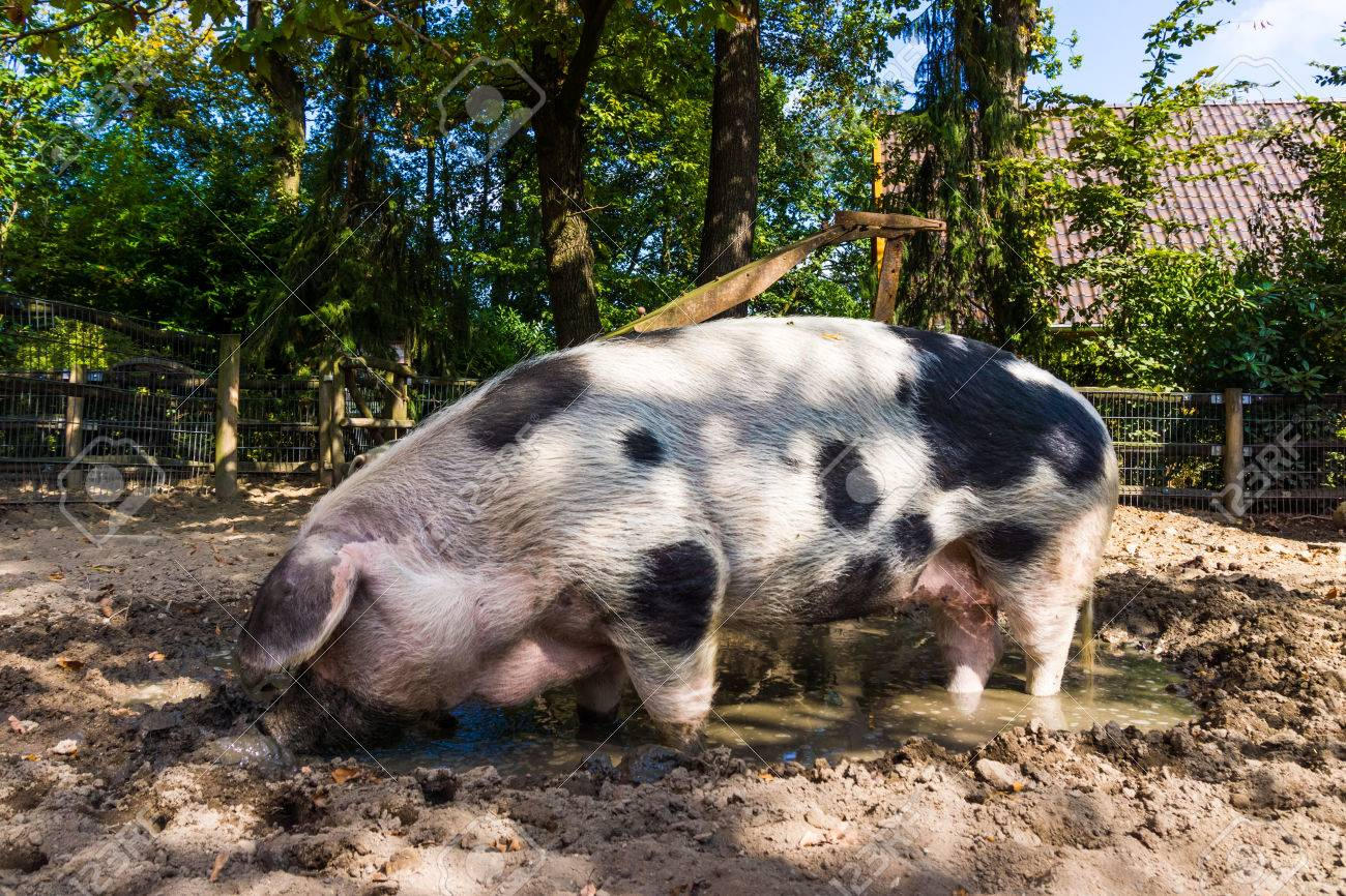 Gemütlich Schwein Draht Käfig Ideen - Schaltplan Serie Circuit ...