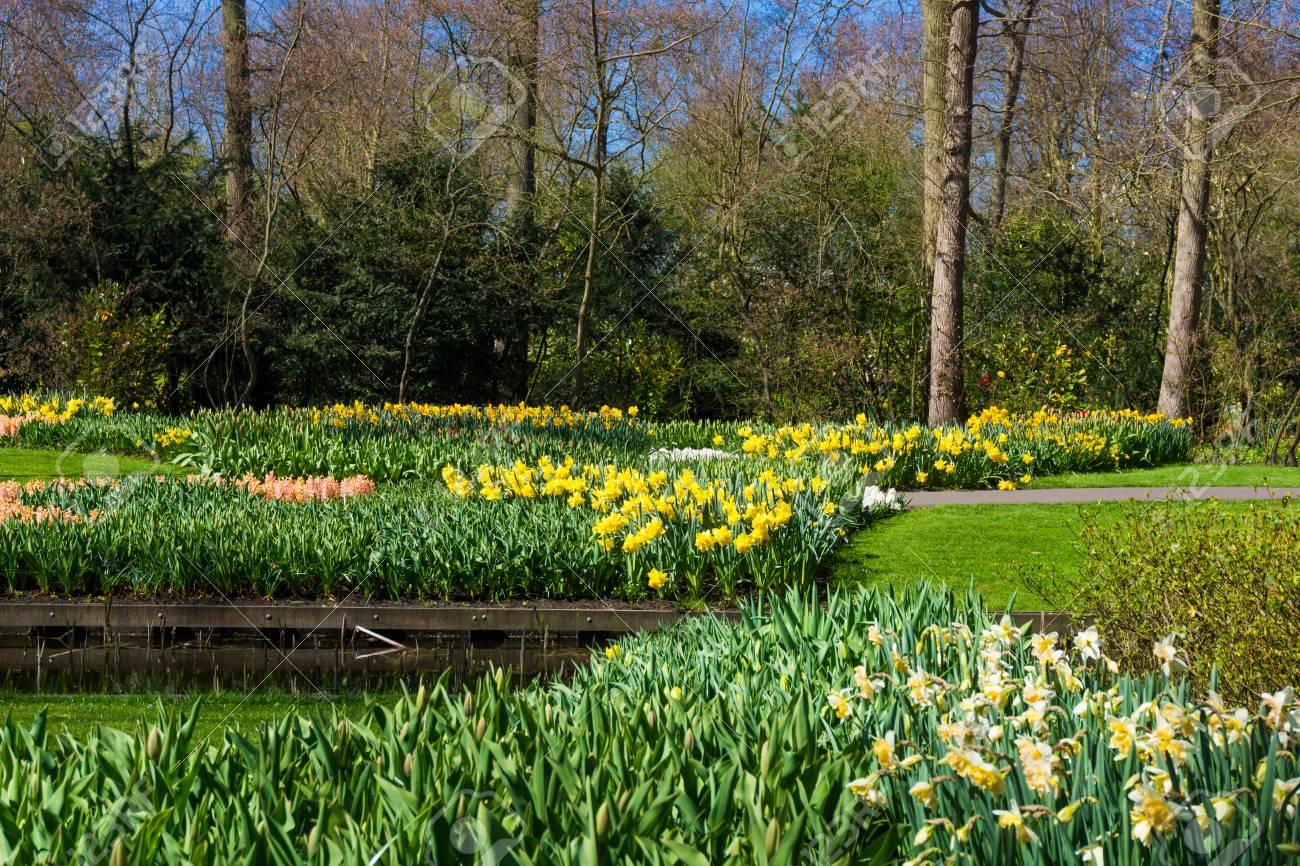 Schöner Garten. Gartenlandschaft. Landschaftsdesign Standard Bild   42723819
