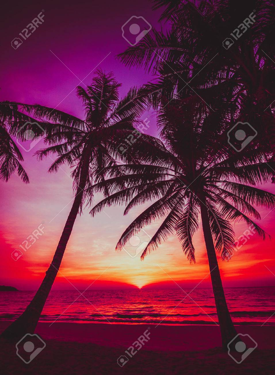 Sunset Tropical Beach Beautiful Stock Photo Picture And