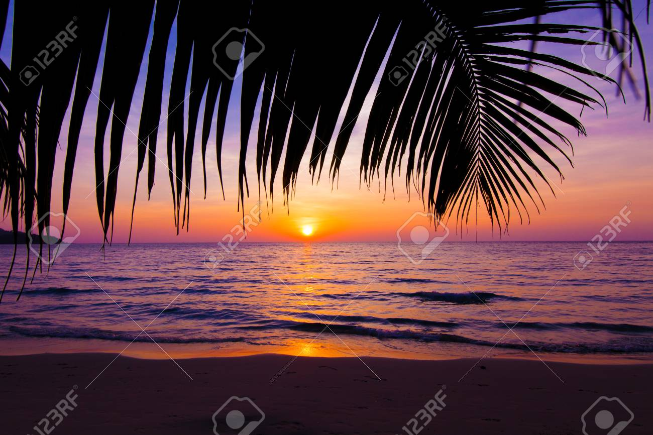 Sunset Landscape Beach Palm Trees Silhouette On