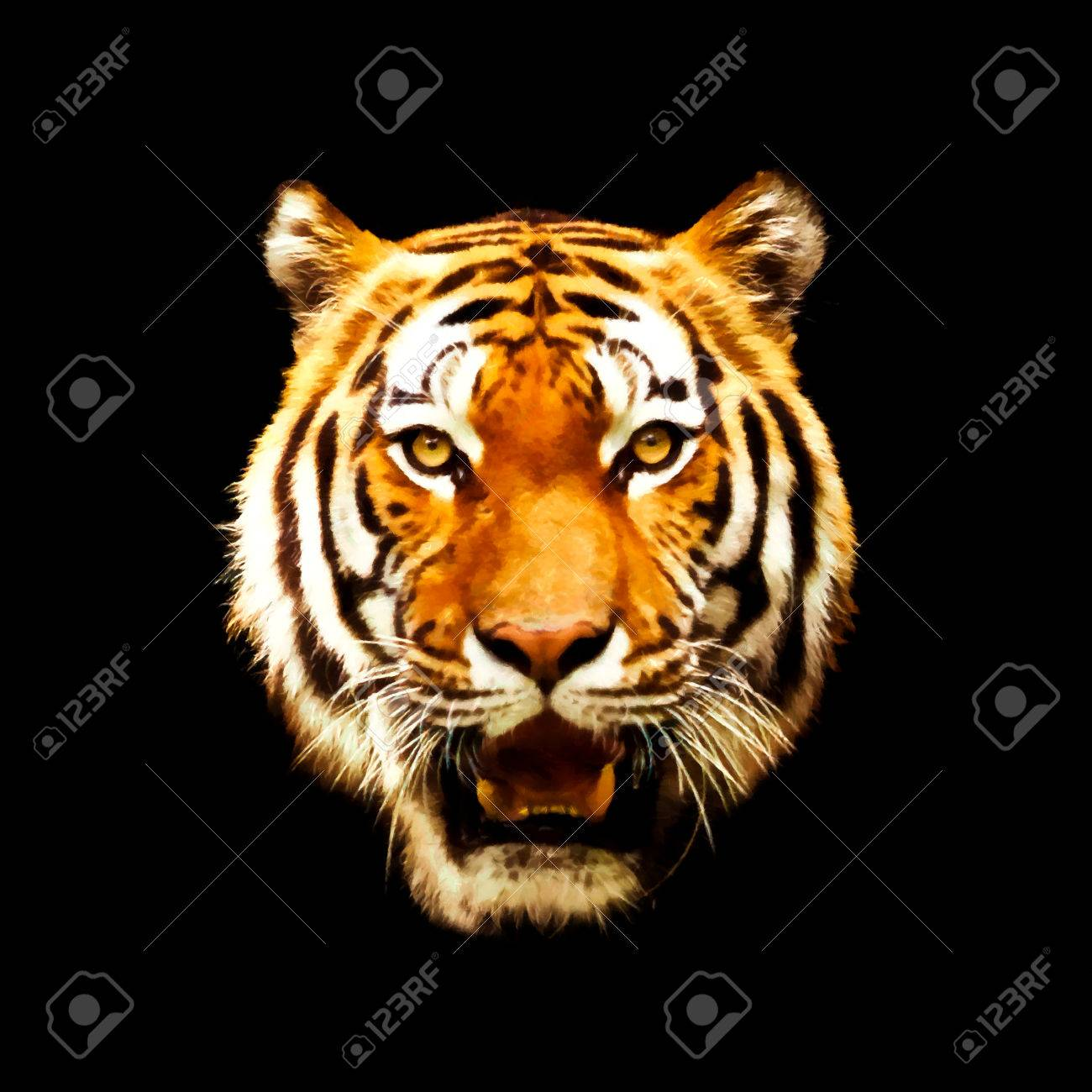 head of a tiger. illustration on black. tiger on black background