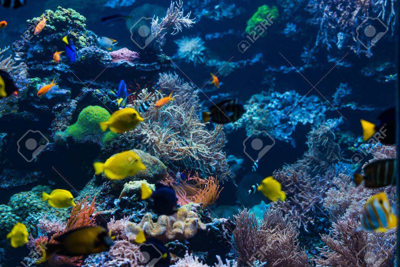 Tropical Fish Underwater World Landscape Stock Photo Picture And