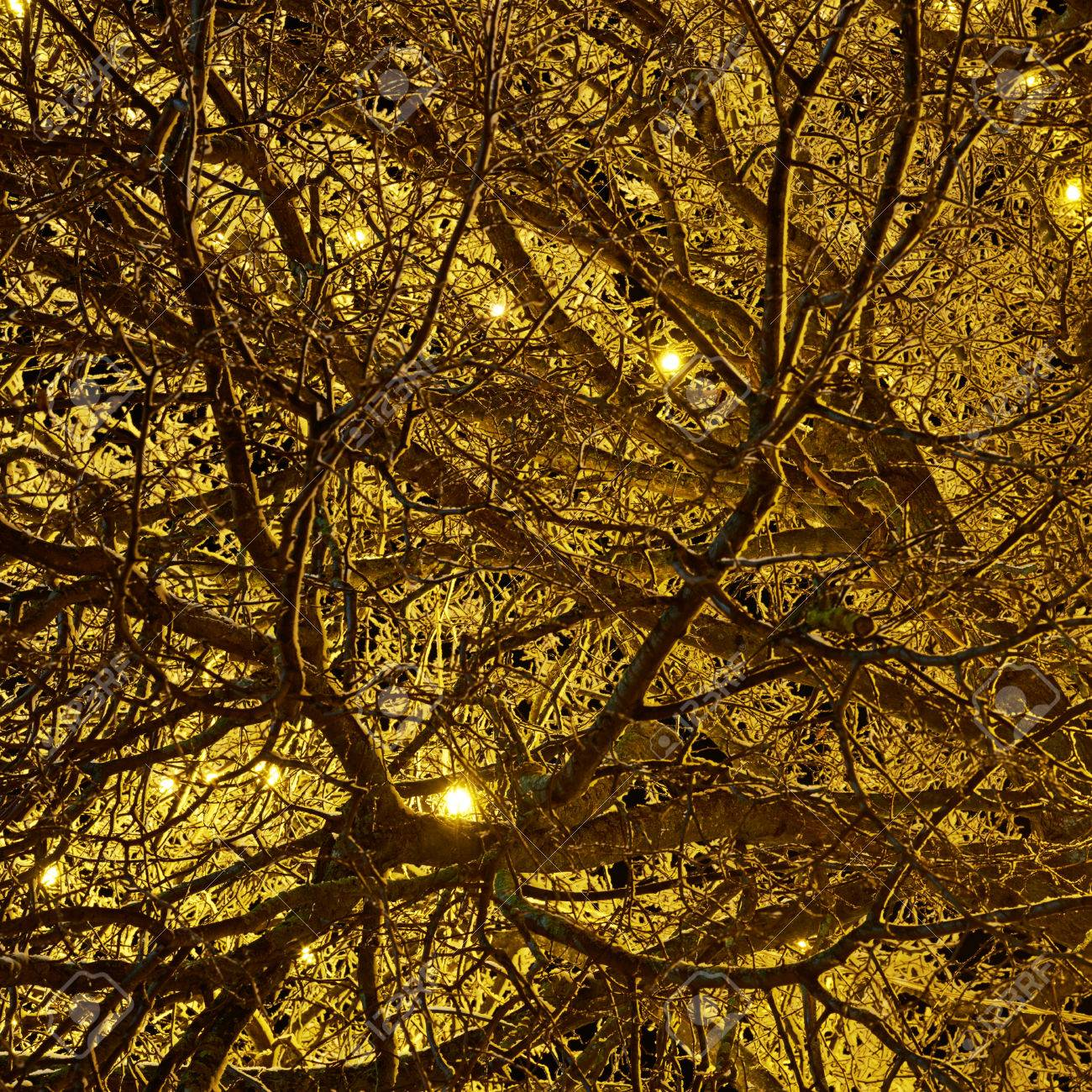 Outdoor tree branches decorated with yellow christmas lights stock outdoor tree branches decorated with yellow christmas lights as a festive abstract background composition stock photo aloadofball Images