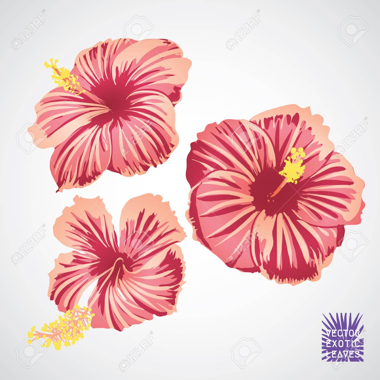 Hibiscus Flower In Pink Red And Yellow Color. Vector Silhouette ...