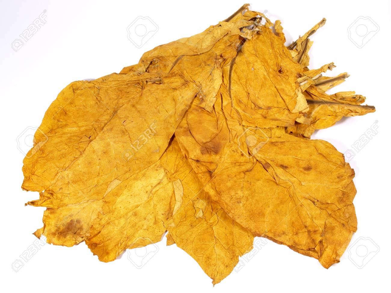 Dried Tobacco Leaves - 121777123