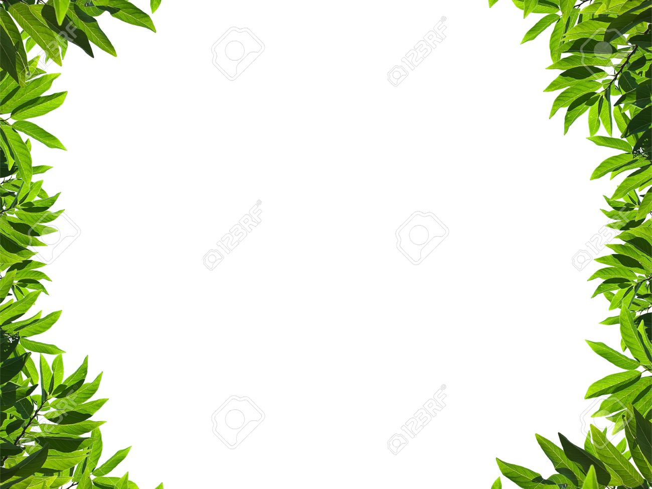 Natural Green Leaf Frame On White Background Stock Photo, Picture ...