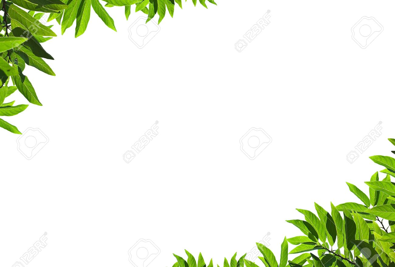 natural green leaf frame on white background stock photo picture and royalty free image image 8927331 natural green leaf frame on white background