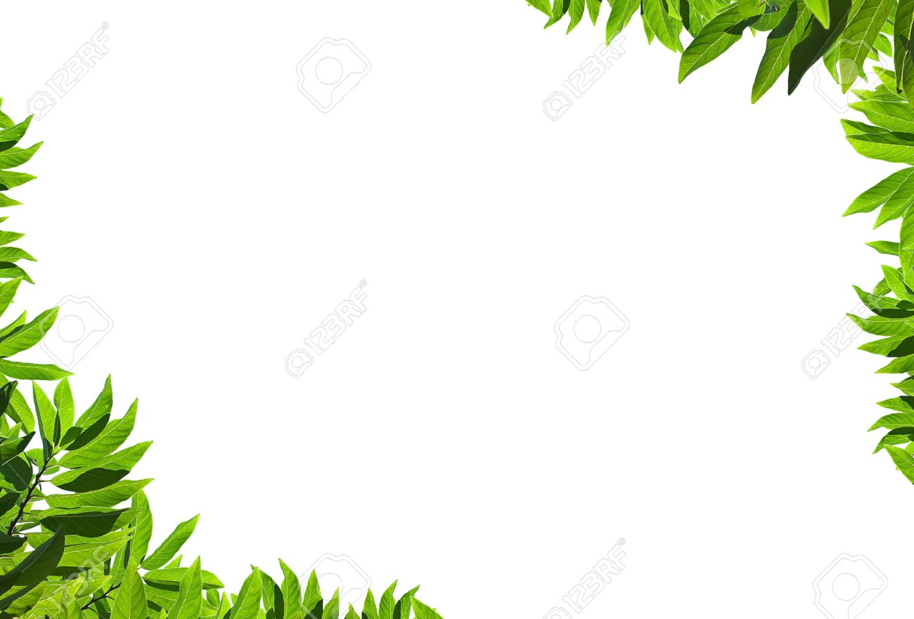 natural green leaf frame on white background stock photo 8927332 - Natural Frame