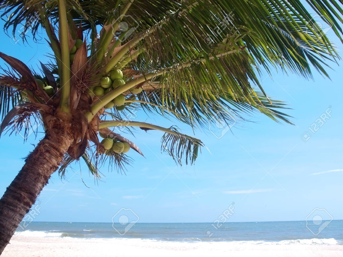 Tropical beach with coconut palm trees in Thailand Stock Photo - 11546790