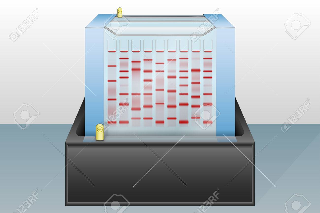 Gel electrophoresis device with loaded sample vector illustration Stock Vector - 28068781