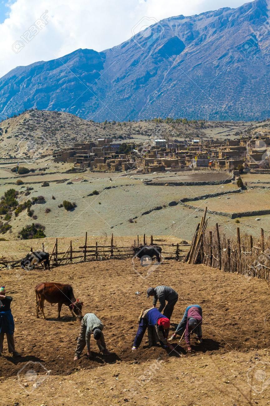 Phot Nepal People Working Hard Terrace Mountains Village. Vertical Photo Stock Photo - 63727306