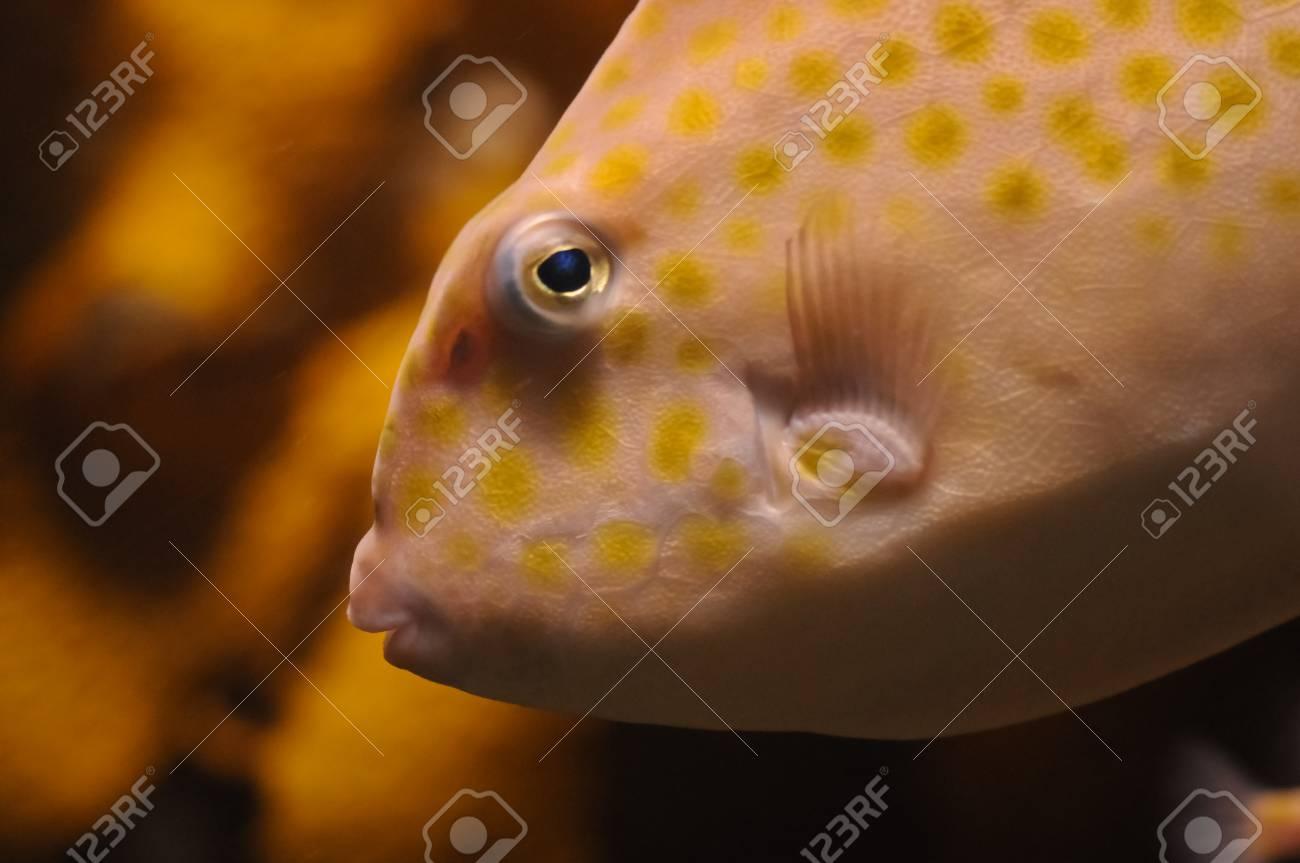 Orange parrot fish head snapshot Stock Photo - 25550698