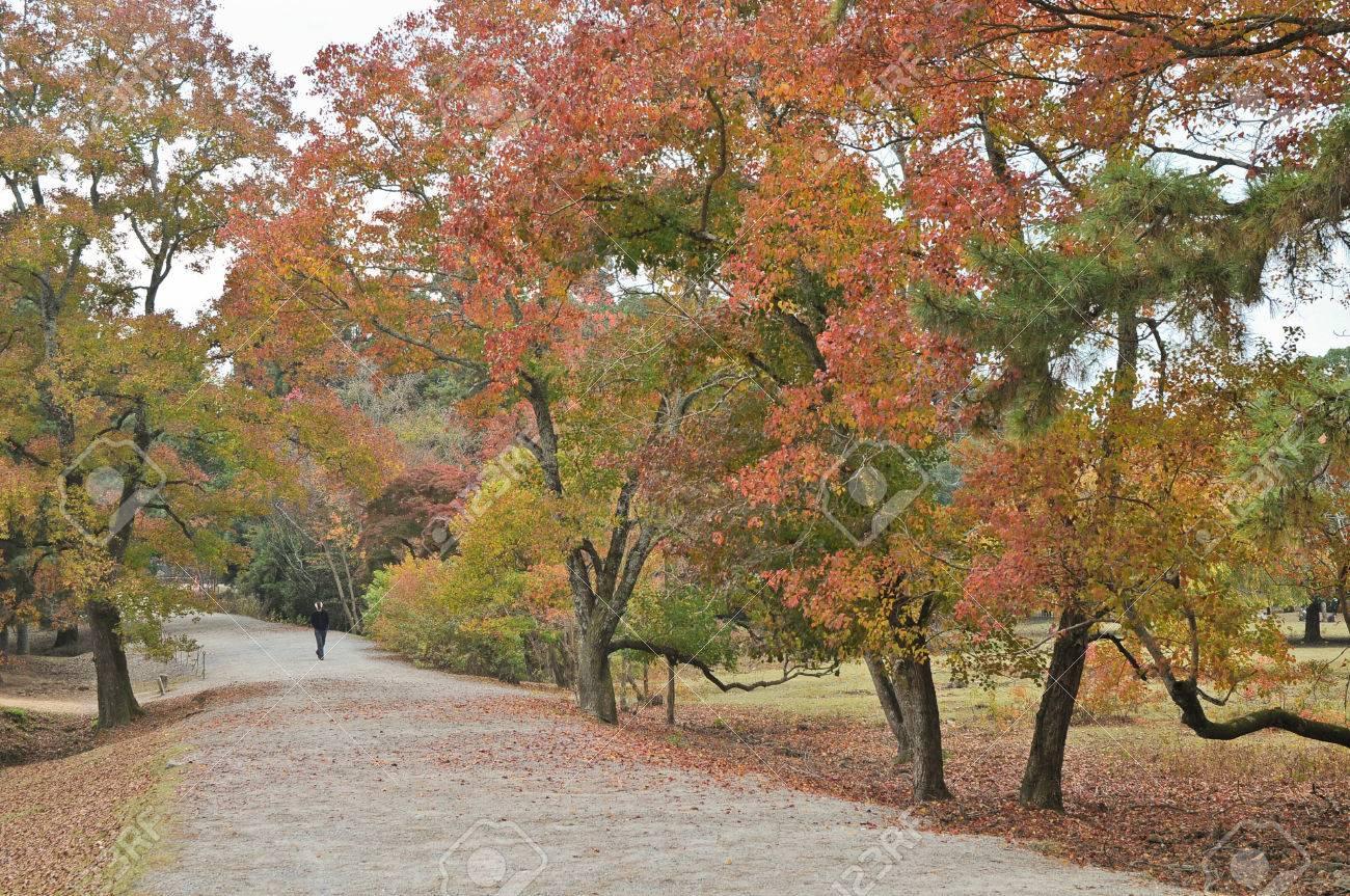 Tranquil Passage In Japanese Zen Garden In Autumn Stock Photo ...
