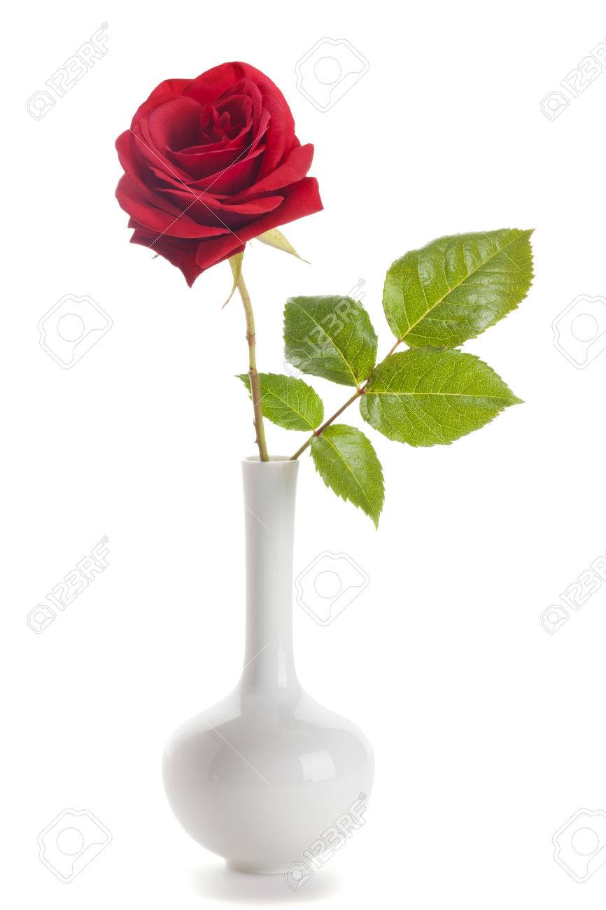 Single red rose in a vase isolated on white background stock photo single red rose in a vase isolated on white background stock photo 41491701 floridaeventfo Choice Image