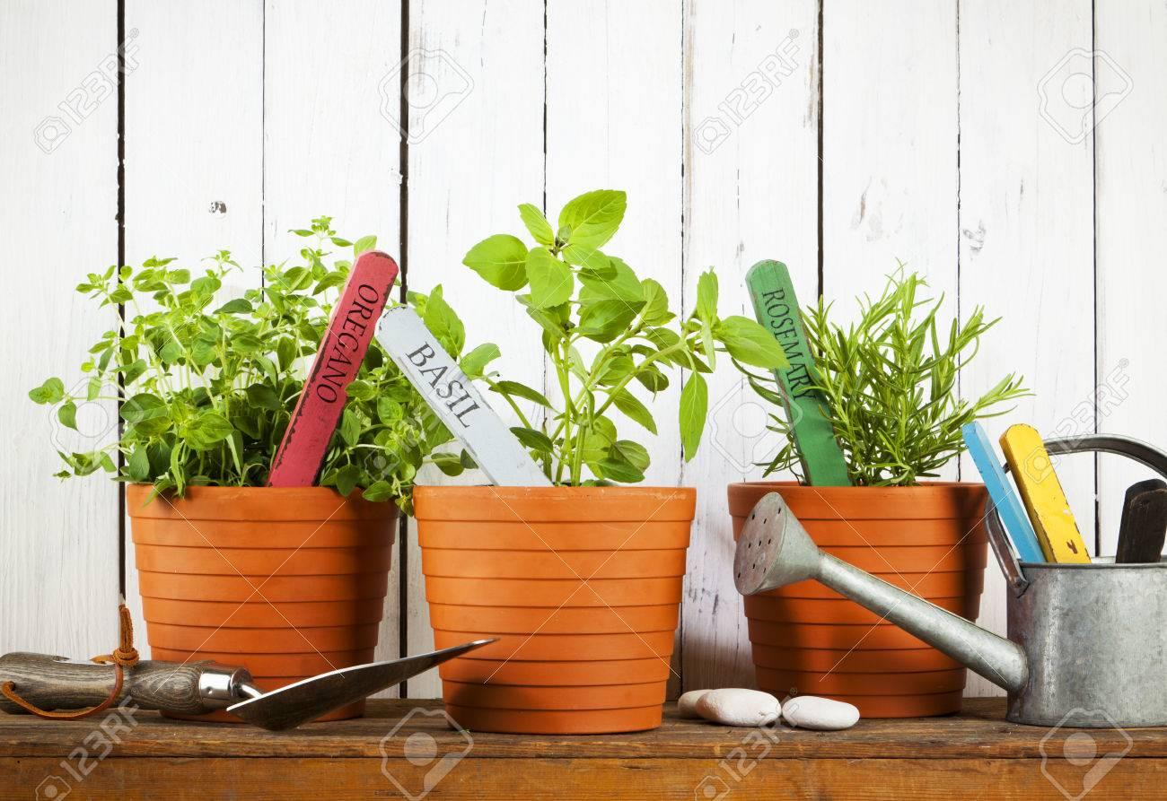 Oregano Basilikum Und Rosmarin Pflanzen Mit Namensschilder In