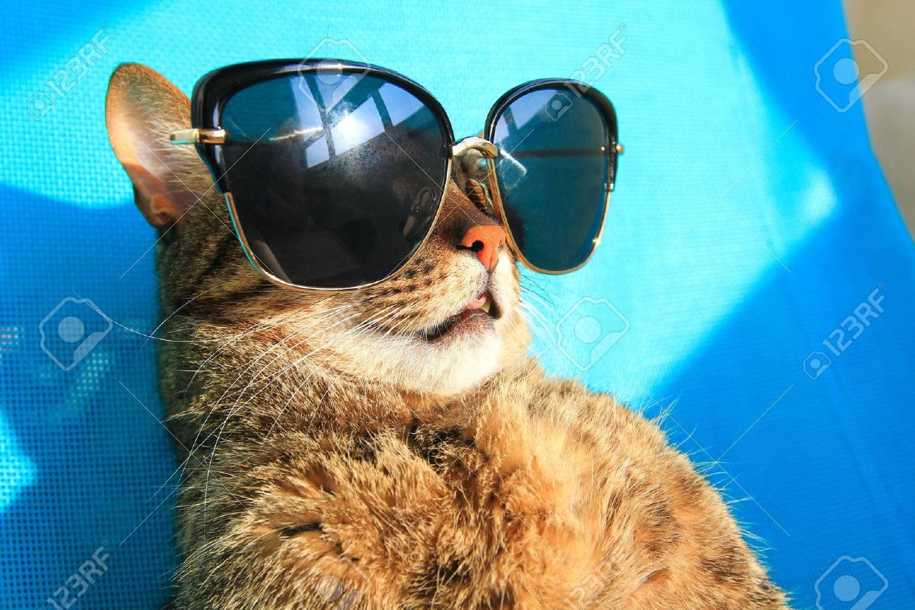 96b5ba60deaea funny cat wearing sunglasses on vacation - summer holidays Stock Photo -  59427187