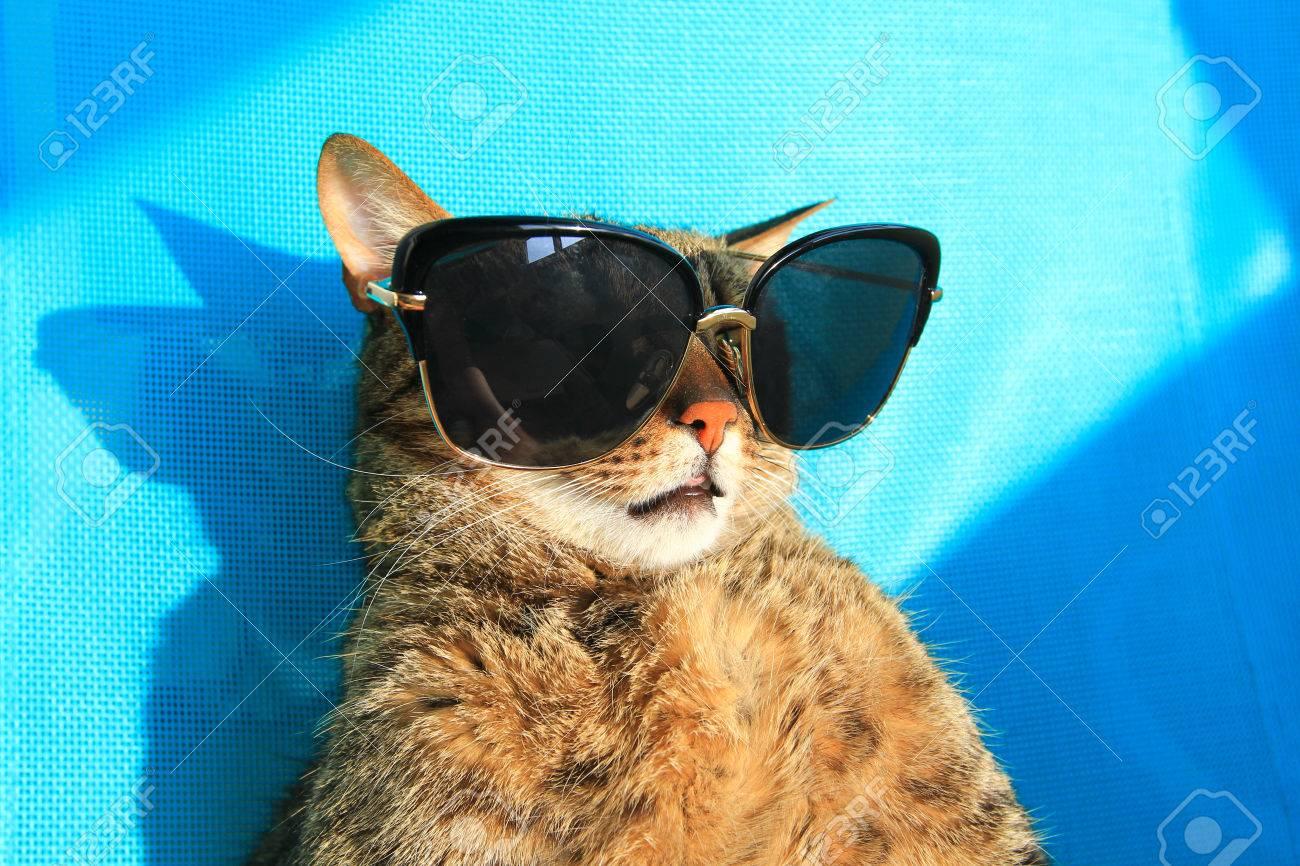 ecd075d7e3b41 funny cat wearing sunglasses on vacation - summer holidays Stock Photo -  59427208