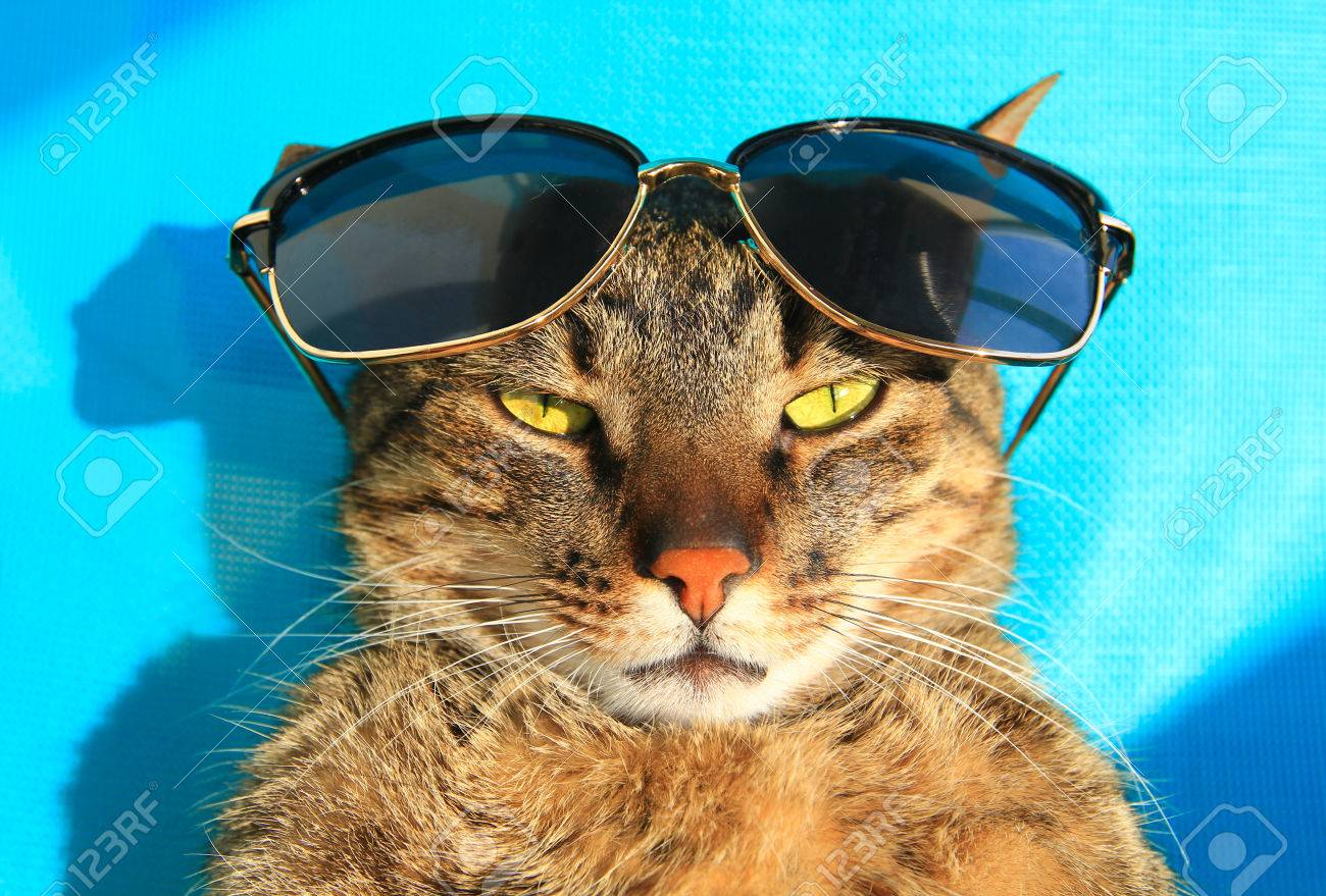 5235bce3e4014 funny cat wearing sunglasses on vacation - summer holidays Stock Photo -  59427212
