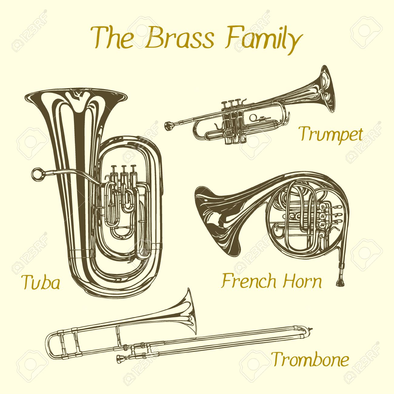 Vector illustration of hand drawn brass family instruments. Beautiful ink drawing of tuba, trumpet, trombone and french horn. - 51916209