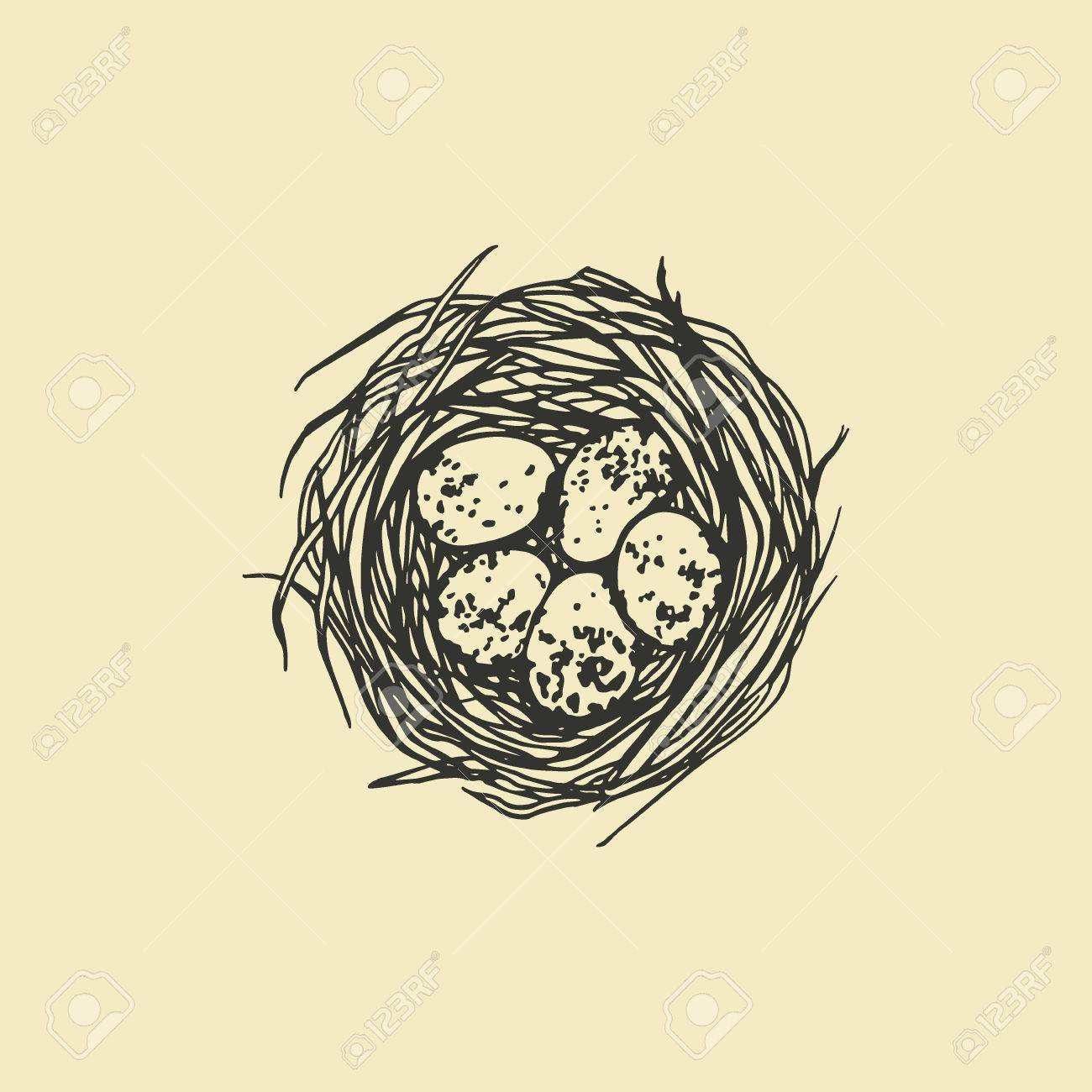 Vector Illustration Of Hand Drawn Bird Nest With Spotted Eggs