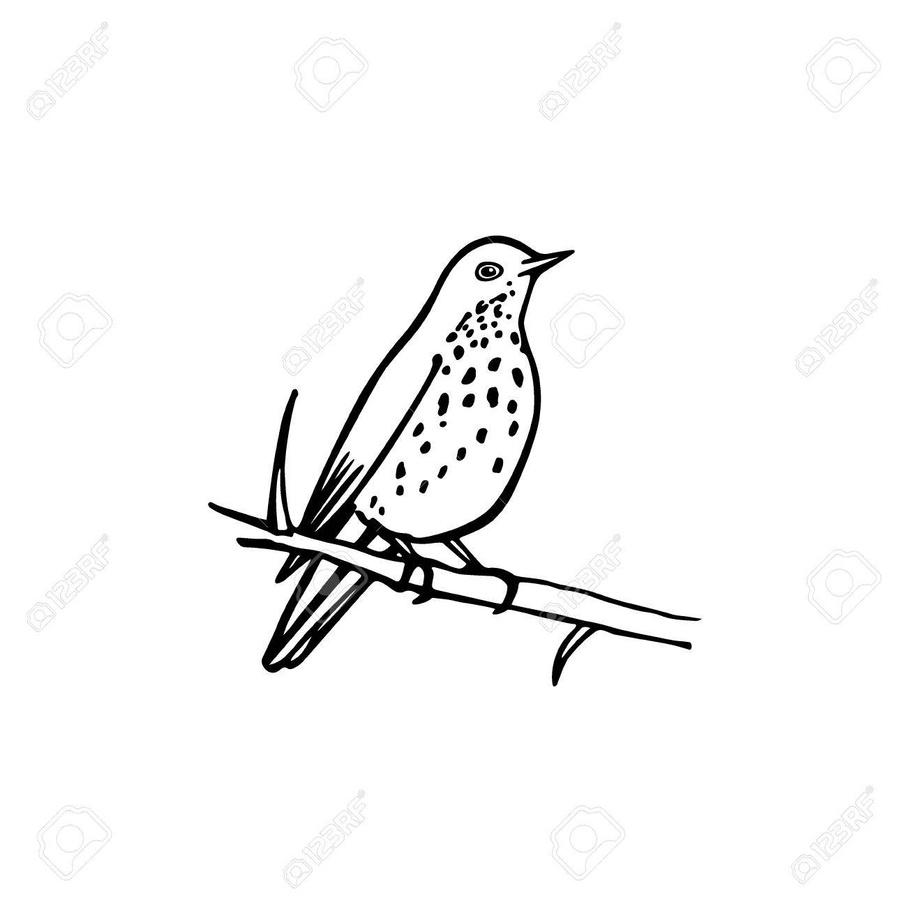 Vector Illustration Of Hand Drawn North America Bird Sitting Royalty Free Cliparts Vectors And Stock Illustration Image 68183792