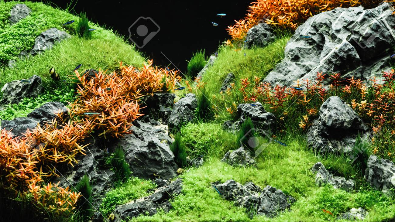Beautiful Tropical Aqua Scape Nature Aquarium Green Plant An Stock Photo Picture And Royalty Free Image Image 115325216