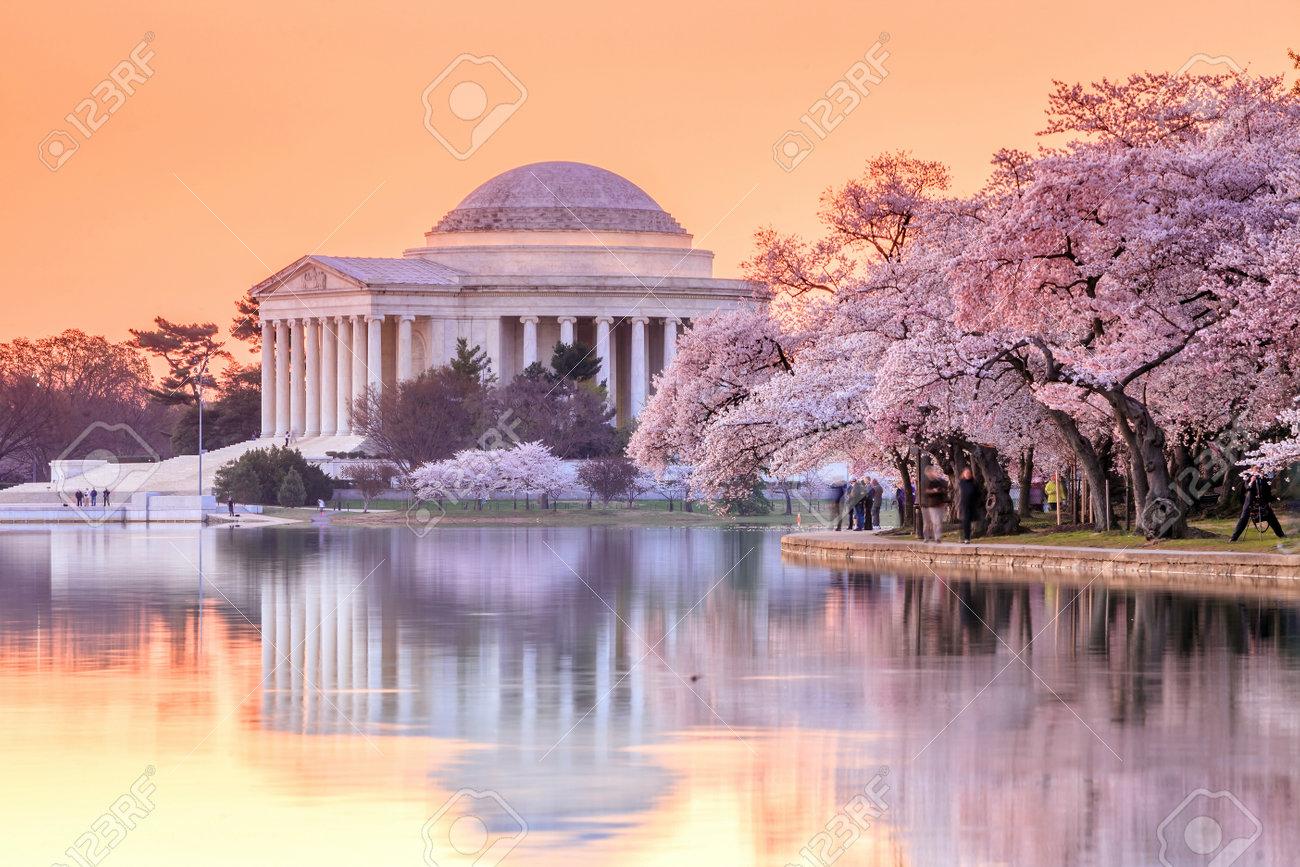 the Jefferson Memorial during the Cherry Blossom Festival. Washington, DC Stock Photo - 34637509