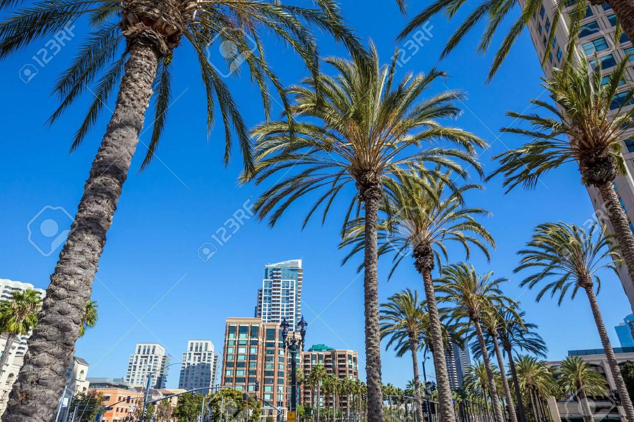 Palm tree and San Diego city Stock Photo - 39354693