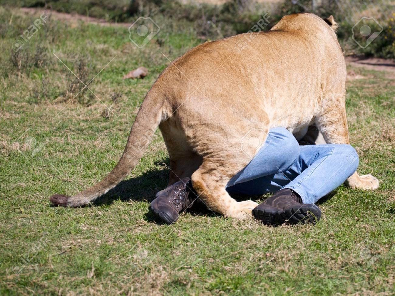 Lioness on a men - 12652830