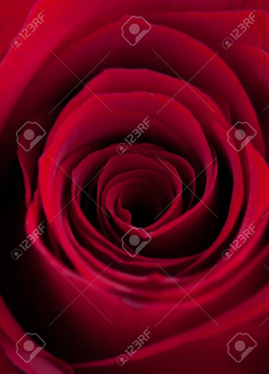 Scarlet Rose Nude Photos 80