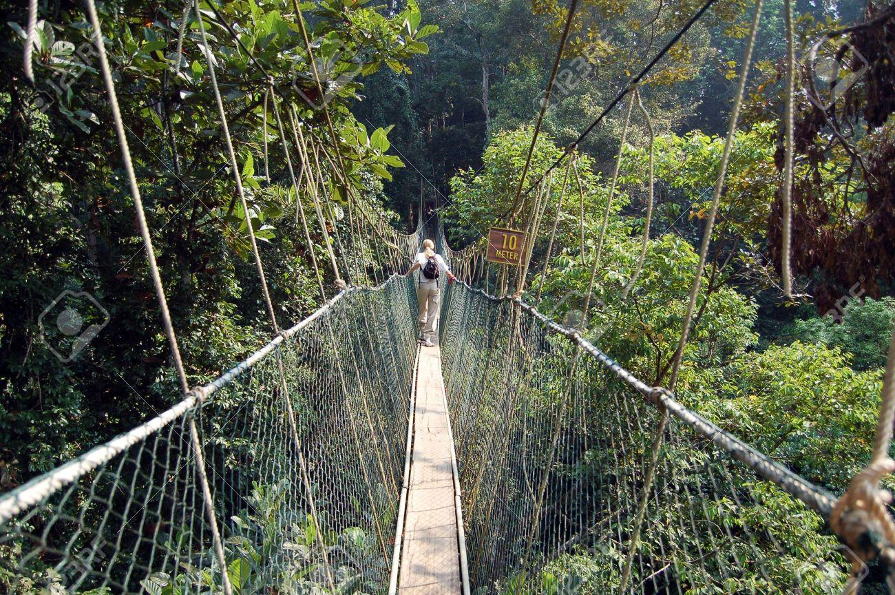 Canopy walkway Taman Negara National Park - Best of Malaysia Stock Photo - 759752 & Canopy Walkway Taman Negara National Park - Best Of Malaysia ...