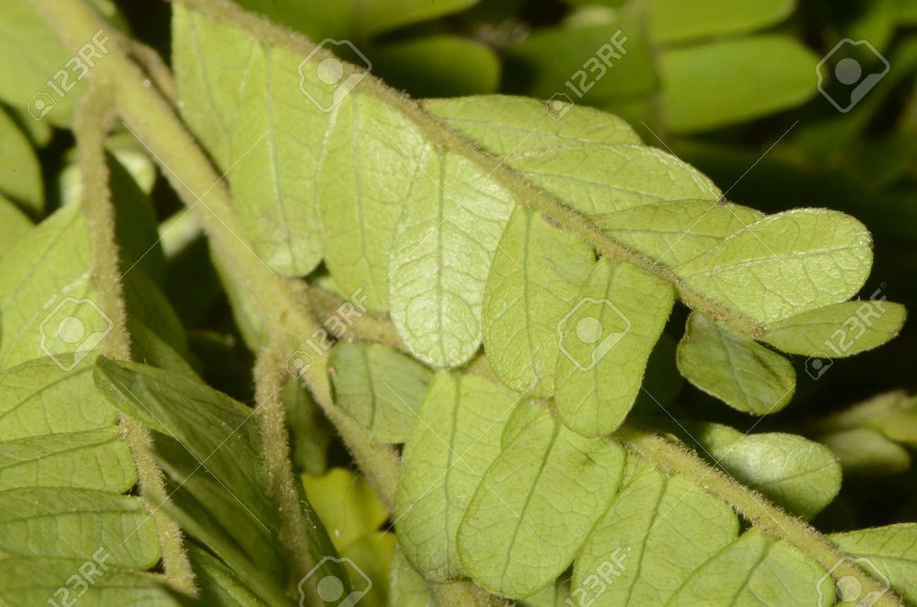 Green leaves textures in macro - 151516943