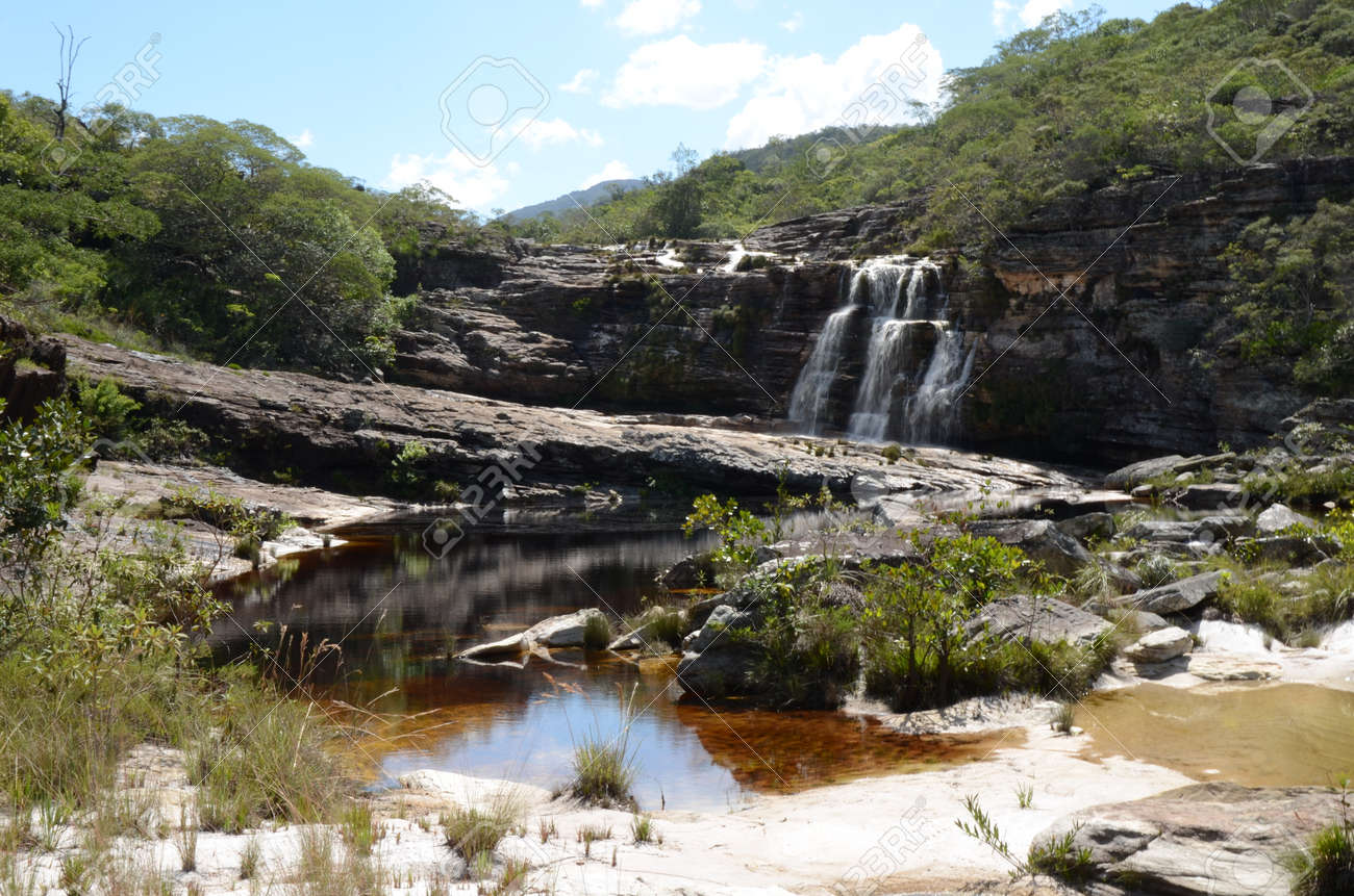 Waterfall in Rio Preto State Park in Minas Gerais at Cachoeira da Semper-Viva (translate to Always-Alive Waterfall, with is the popular name of Actinocephalus polyanthus) - 151844981