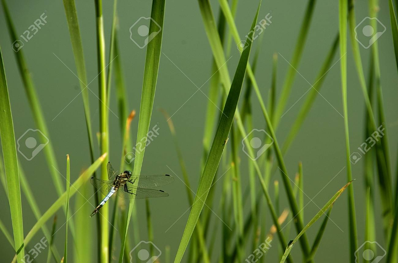 dragon fly in the grass Stock Photo - 4078041