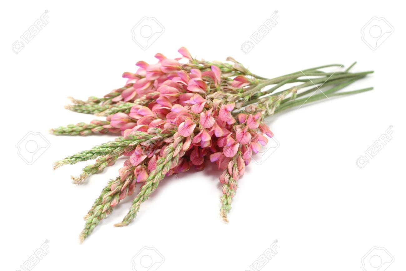 ramo de flores silvestres de color rosa sobre fondo blanco foto de archivo