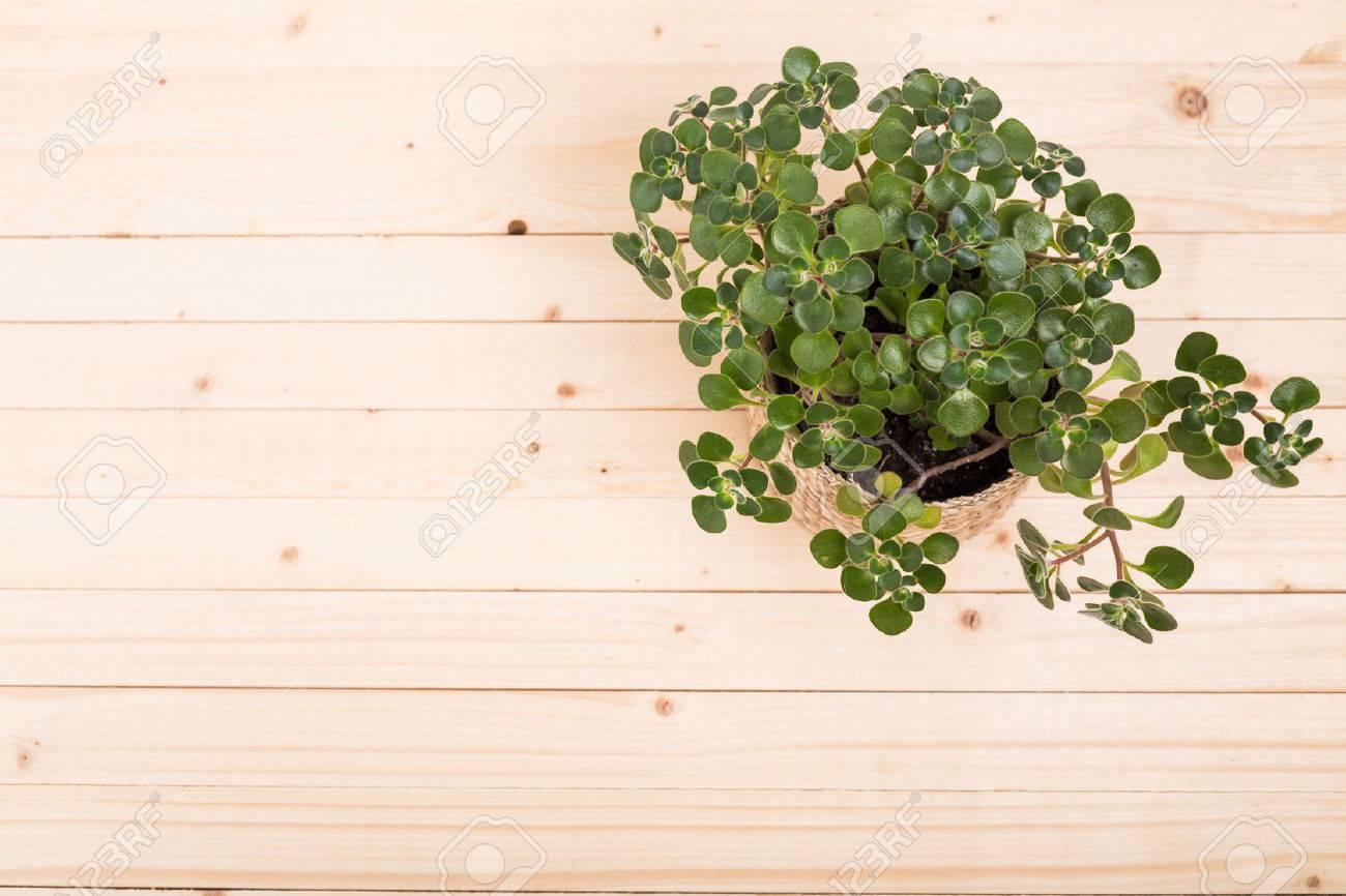 Succulents, house plants in pots - 77057502