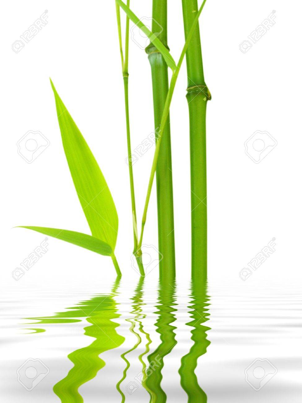 bamboo water reflection Stock Photo - 2389224